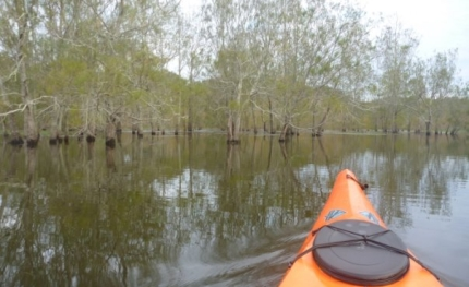 Paddling through the trees at Lake Avoca