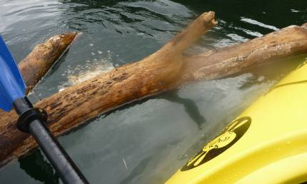 Submerged logs - enemies to kayaks and motorboats alike