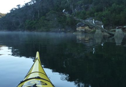 Paddling past sleeping birds in misty Bantry Bay, Sydney