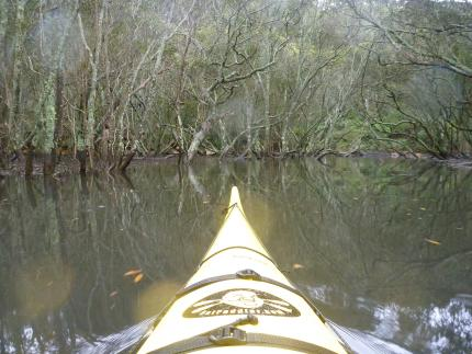 Drifting through mangroves, Scotts Creek, Sydney