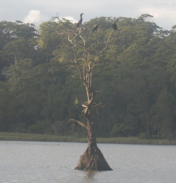 Lonely tree full of birds