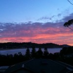 Morning glory at Avoca Beach