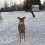 Hey look, it's Bambi!! Hello sweety!