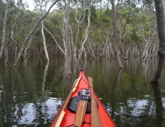 Paddling amongst the mangroves at high tide