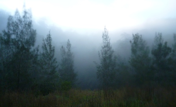Early morning fog surrounded our campsite. Cold, but beautiful.