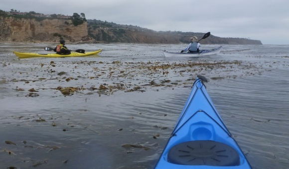 Struggling through the kelp beds to the cliffs of Palos Verdes