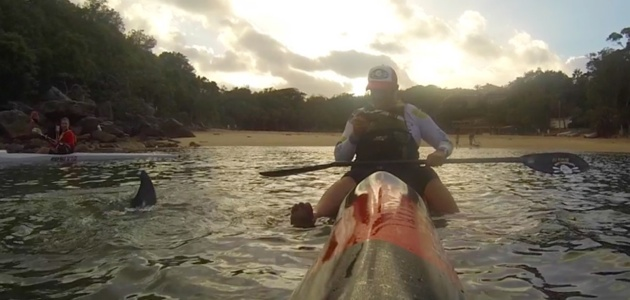The dolphin came up to look at my Hayden surfski