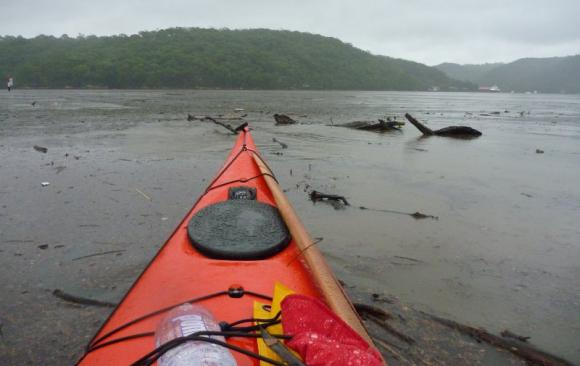 Debris packing the surface of Middle Harbour tangling our kayaks
