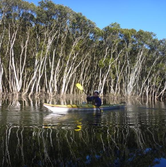 Mangrove reflections. Beautiful.