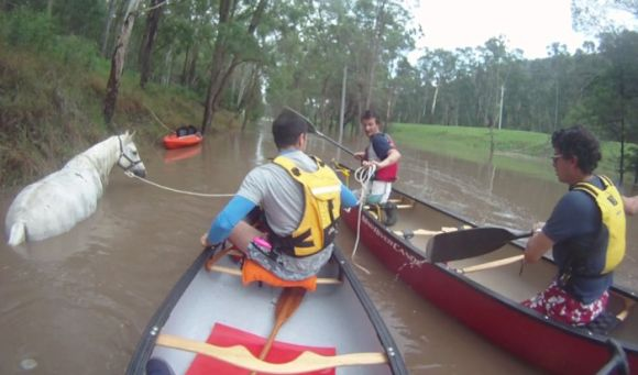 The stranded horse and paddlers to the rescue