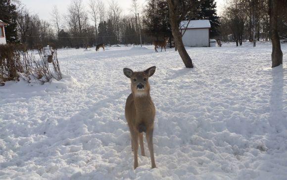 Hey look, it's Bambi!! Hello sweety!
